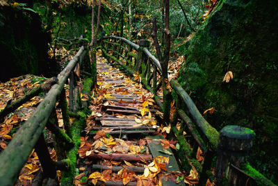 Old-Wooden-Mountain-Bridge-wp